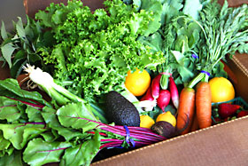 Sample CSA Box